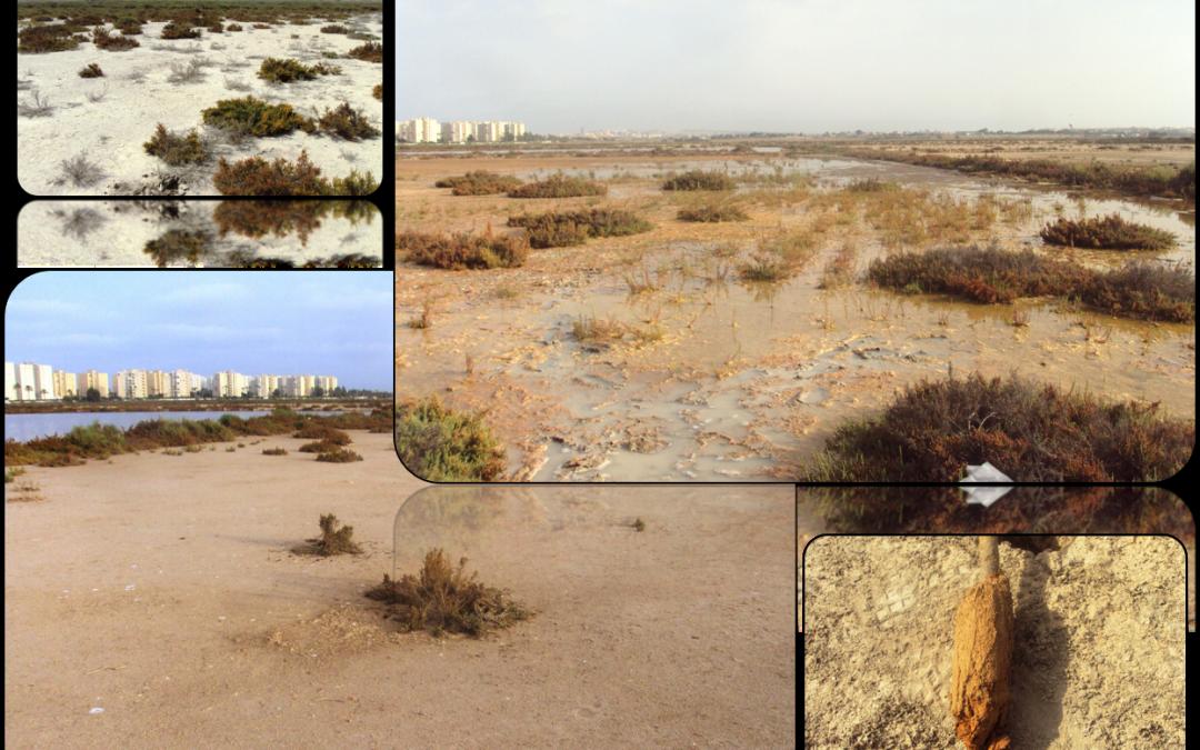Colaboramos con la UPCT en el seguimiento ambiental del Saladar de Agua Amarga, en Alicante.