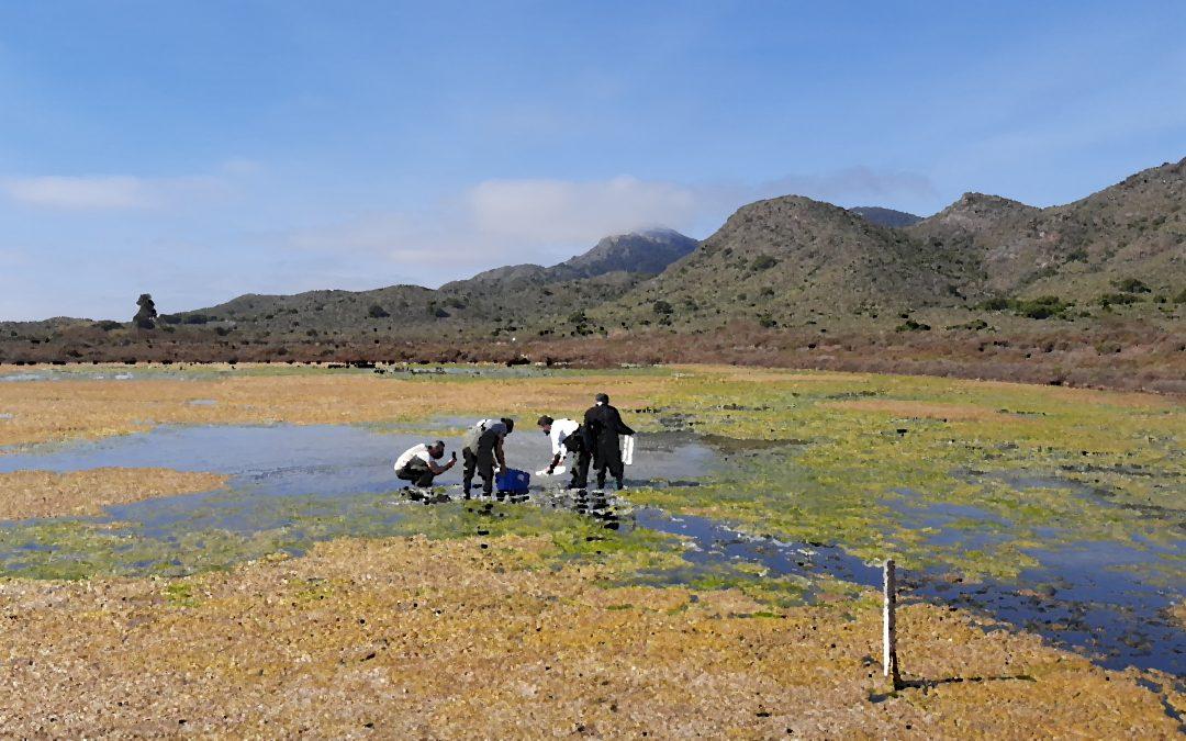 Miembros de BIOCYMA participan en el reforzamiento de las poblaciones de fartet en las salinas del Rasall.
