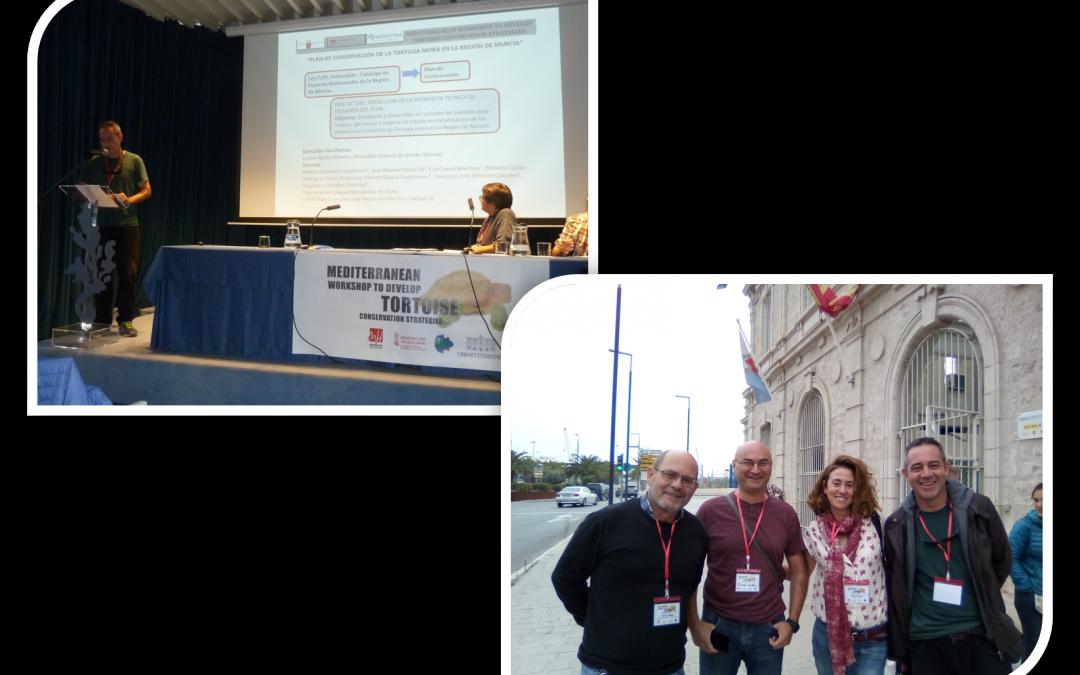 Participamos en la Reunión Mediterránea para el desarrollo de estrategias de conservación de tortugas